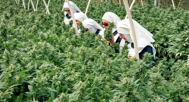 We talk to the director of a film about weed-dealing nuns